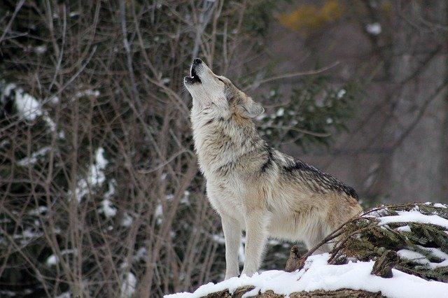 狼狽売りとは何か?わかりやすく解説